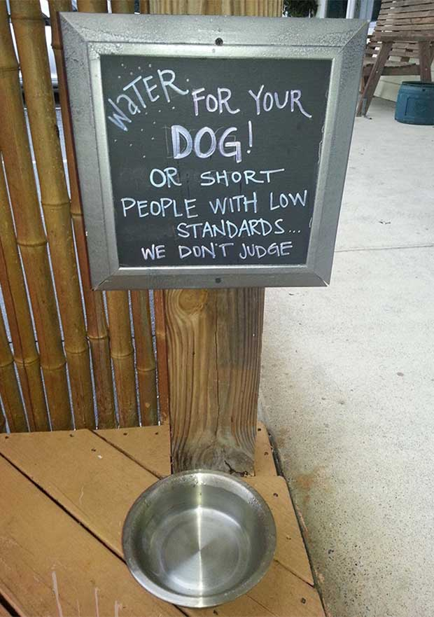 How low do you go? ~ Funny Sidewalk Signs ~ Dog or short people water bowl