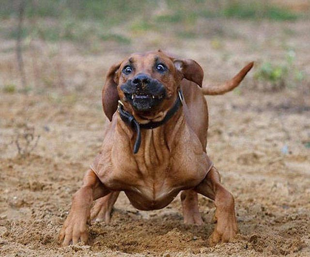 Funny Dogs ~ I think it's broken ~ frozen stance