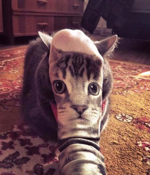 Meow ~ ~ funny pics and memes ~ cat sock face
