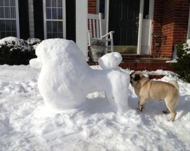 Dogs will be dogs ~ funny pics, funny memes pug smelling snowman poodle's ass