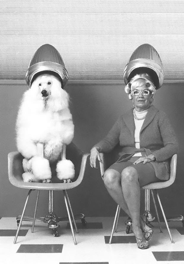 vintage beauty shop hair salon woman and poodle under hair dryers