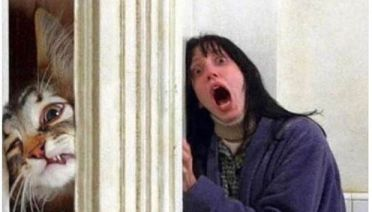 Funniest Memes of the Day ~ The Shinning my cat breaking through door every time I go to bathroom