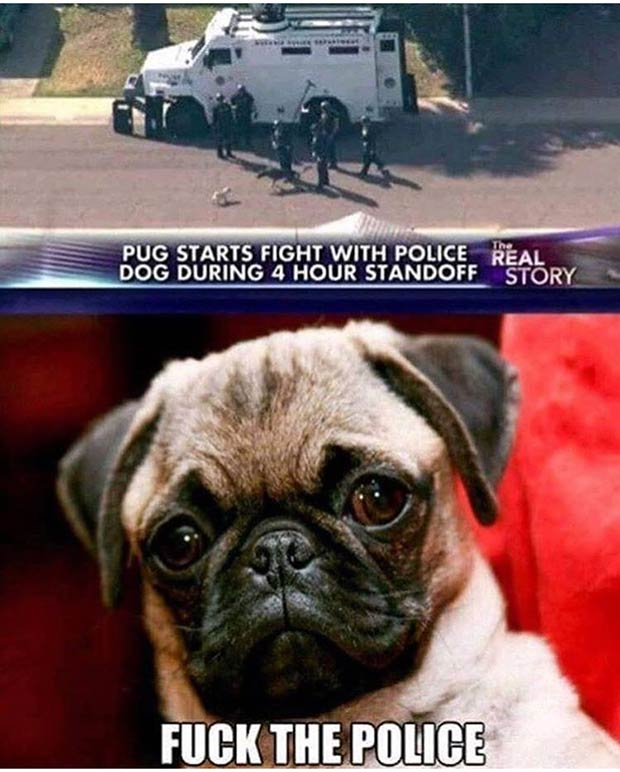 Funny Memes ~ Pug starts fight with police dog