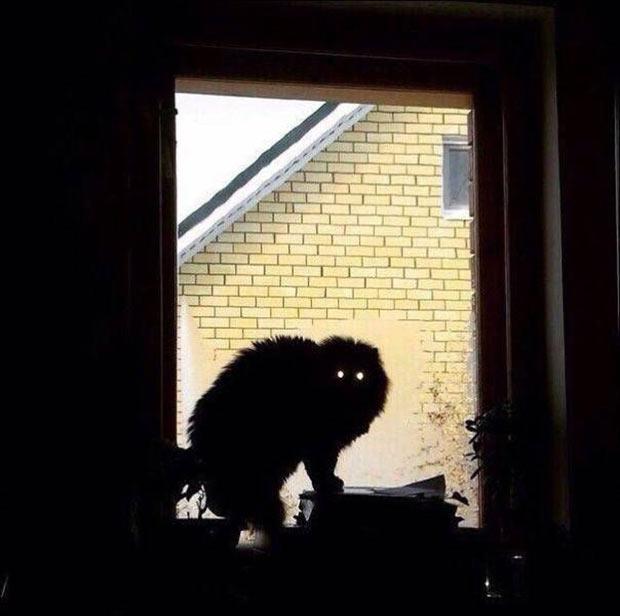 creepy cat, glowing eyes, ~ 33 Funny Pics, Funny Memes, Random Humor