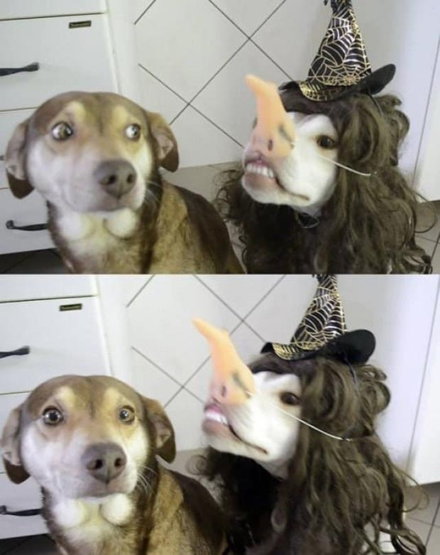 Funny halloween dog picture ~ 33 Funny Pics and Memes best