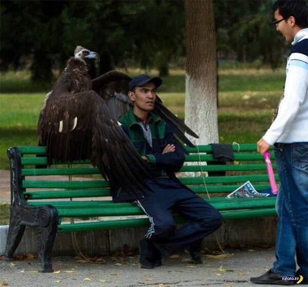 33 Funny Pics and Memes, and Random Humor ~ Man posing with giant condor
