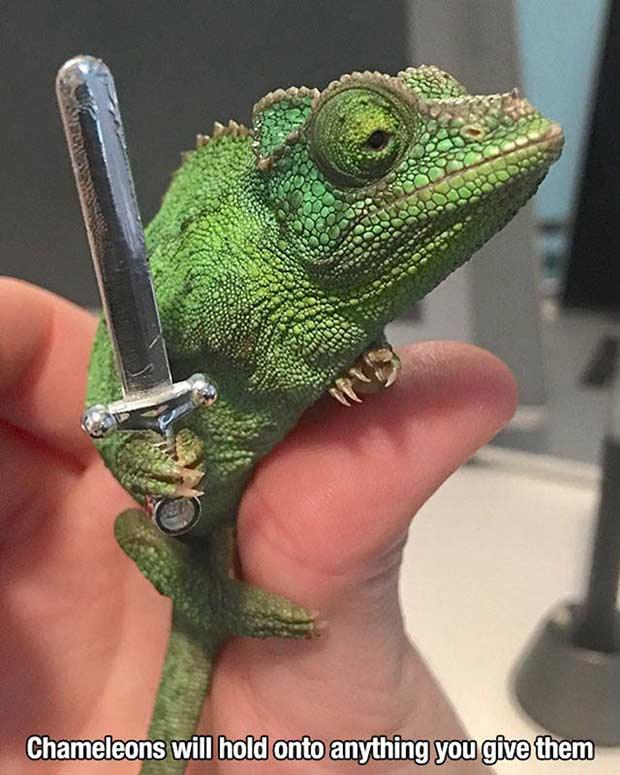Random Humor : 35 Funny Pics and Memes ~ ~ chameleon holding sword