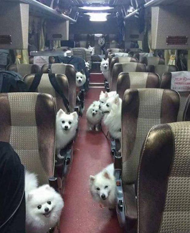 33 Funny Animals Guaranteed to Raise Your Smile ~ happy dogs & cute puppies on bus