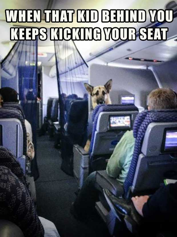 35 Funny Memes and Pics of Humor Galore ~ German Shepard dog on airplane kicking seat
