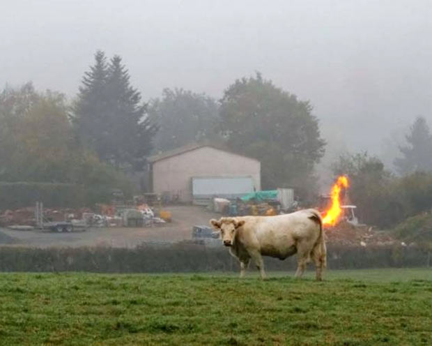 33 Best Memes and Funny Pics Laced with Humor! ~ cow fart methane flaming