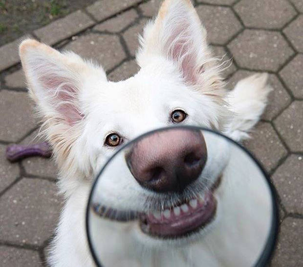 33 Best Memes and Funny Pics Laced with Humor! ~ dog smiling magnifying glass