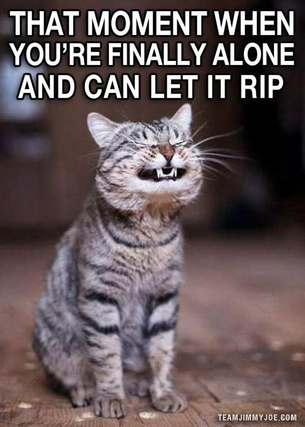 34 Funniest Memes and Random Pics with Humous Convictions ~ cat meme finally alone let it rip fart humor