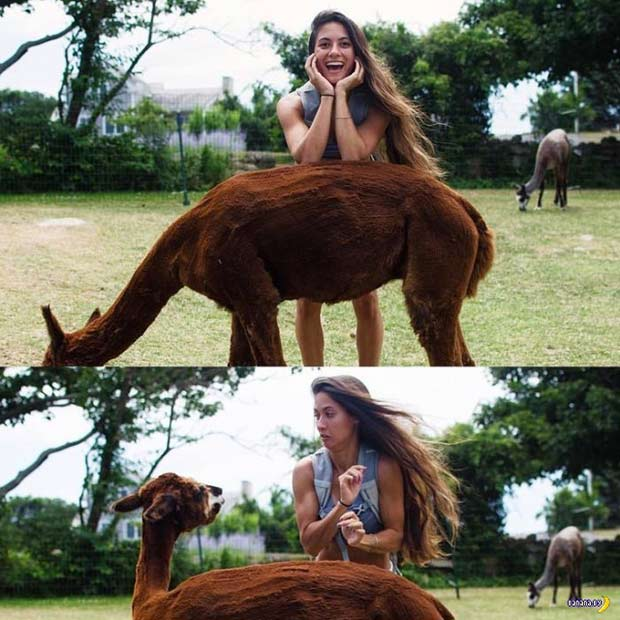35 Funny Memes and Random Pics to Fuel Your Humor ~ photo of woman with llama surprise