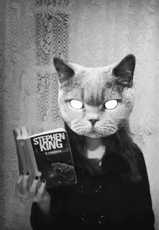 31 Best Memes and Funny Pics That'll Wet Your Eyes ~ creepy cat head Stephen king book
