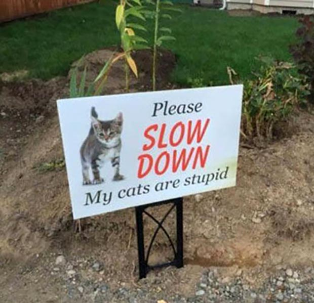 31 Best Memes and Funny Pics That'll Wet Your Eyeballs ~ funny signs, please slow down my cats are stupid cat humor cat memes