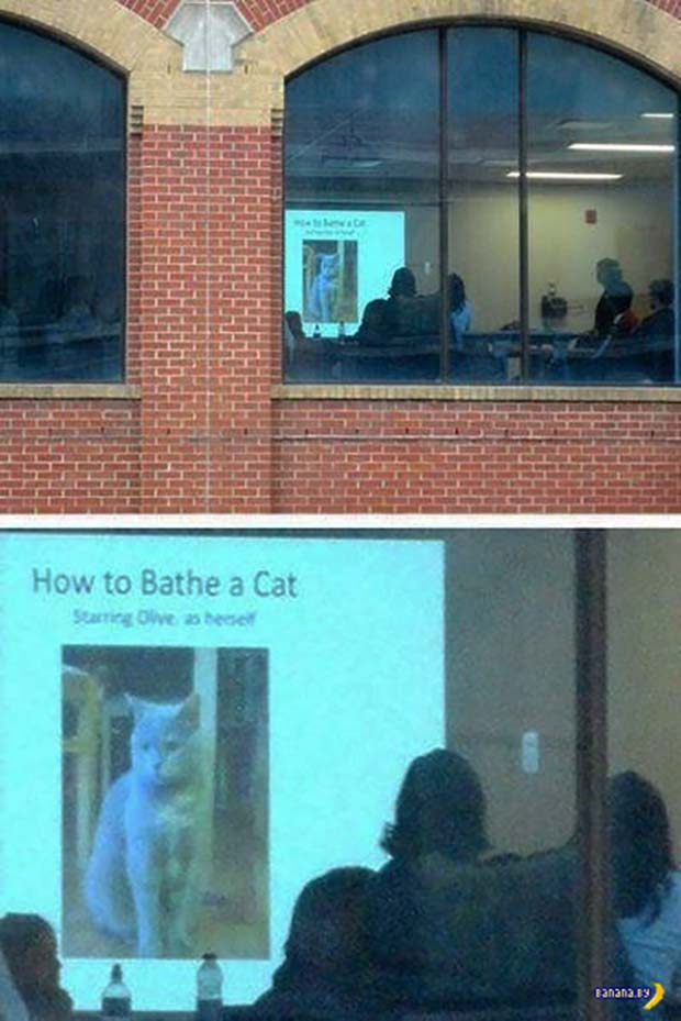 33 Funny Memes and Crazy Pics That'll Tickle Your Soul ~ spying on work meeting powerpoint presentation how to bathe a cat