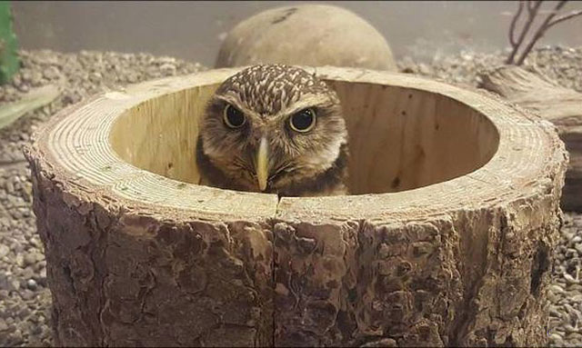33 Funny Memes and Pics to Release Your Inner Humor ~ angry owl in tree stump
