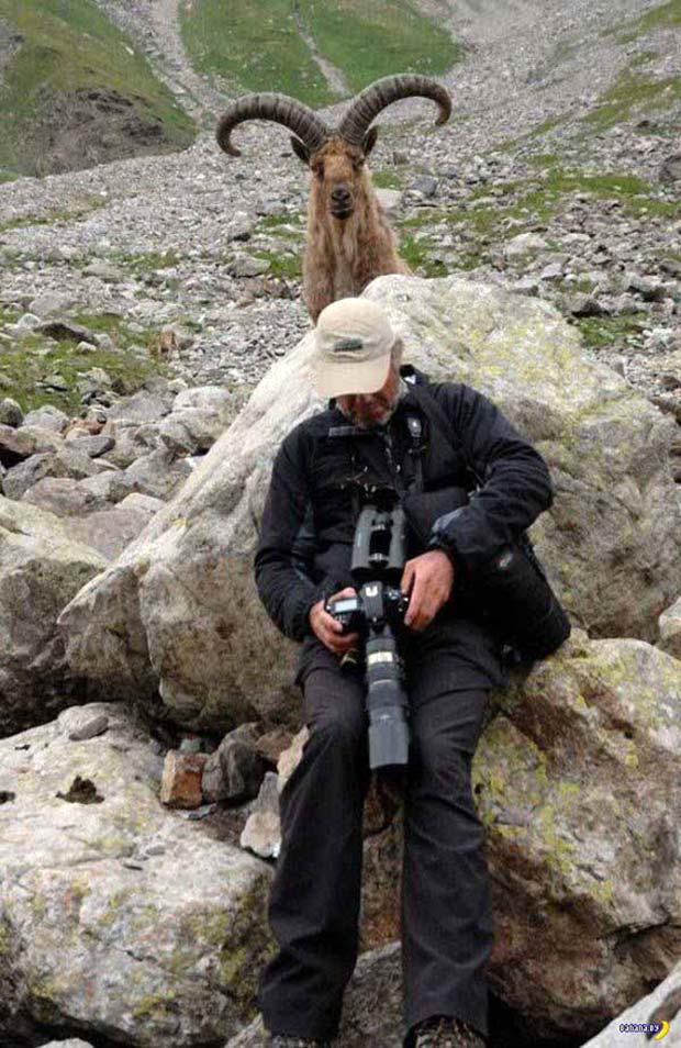 33 Funny Memes and Pics to Release Your Inner Humor ~ nature photography mountain goat hiding behind photographer