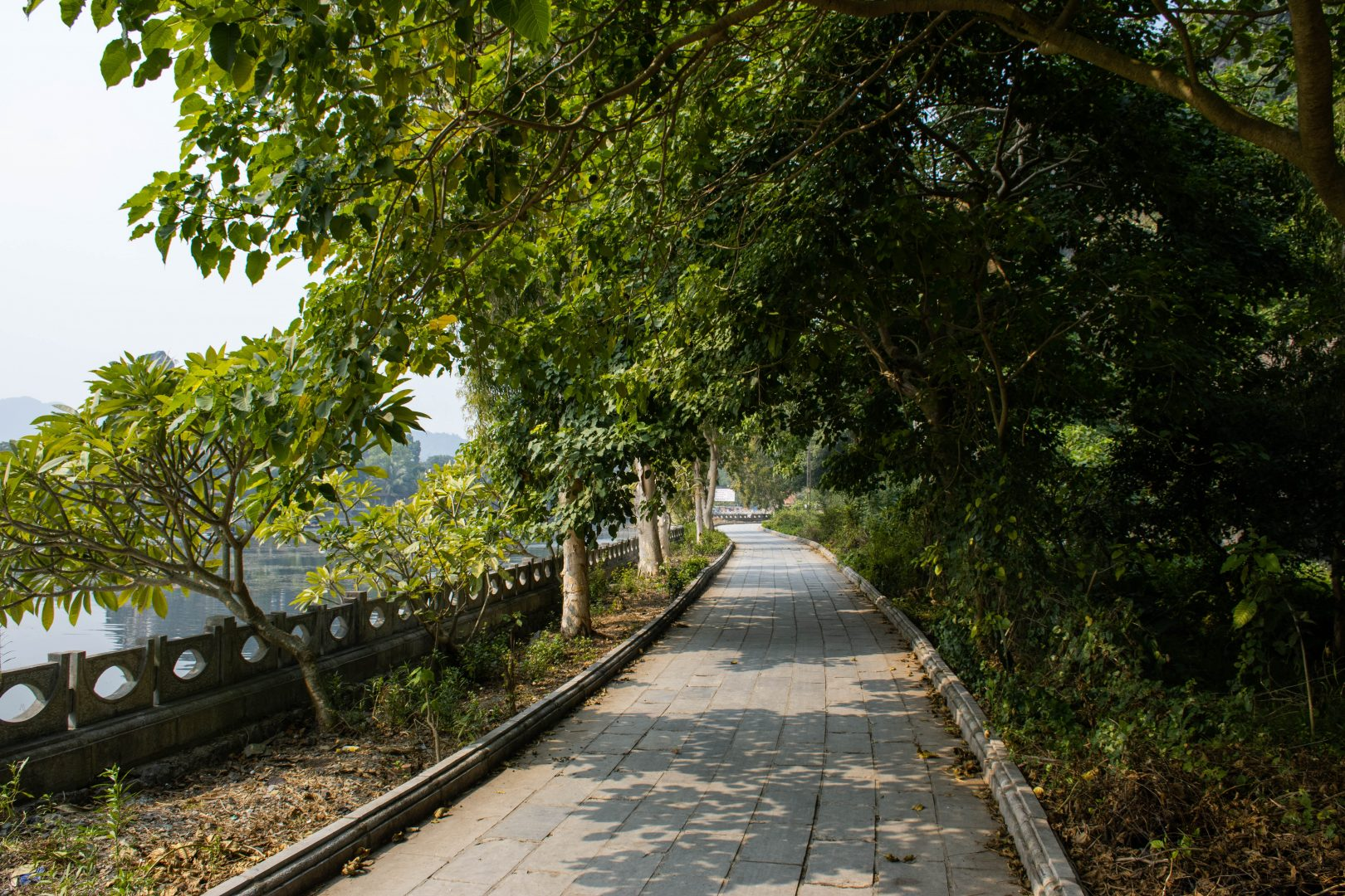 gray concrete pathway between green trees and concrete fence during daytime