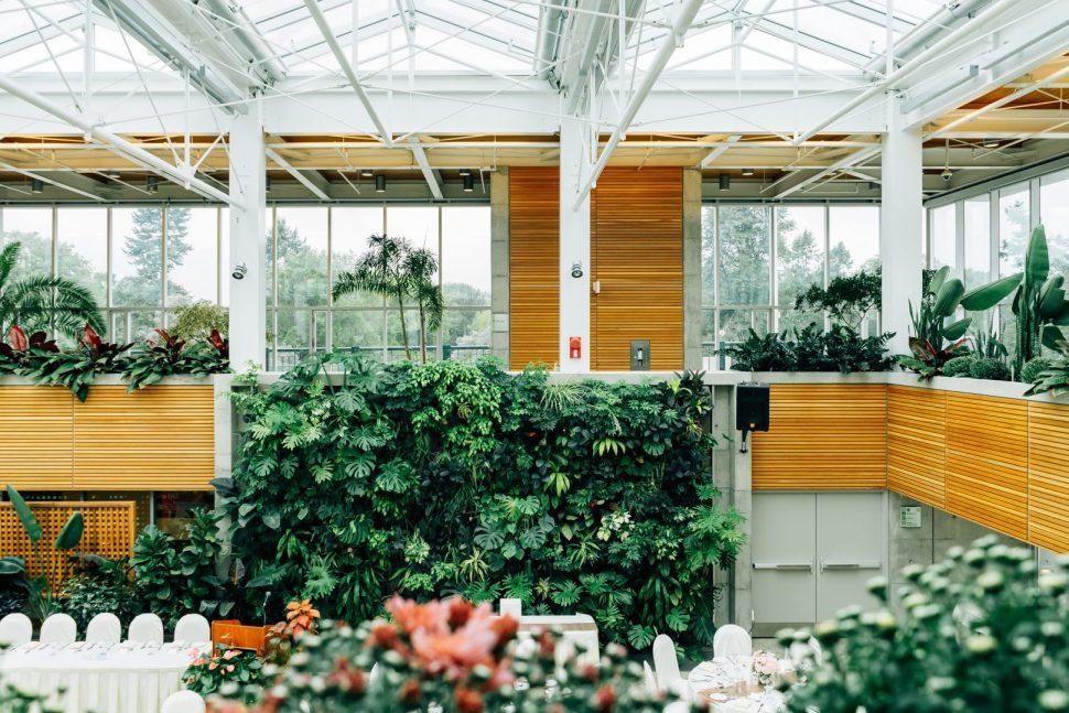 green plants on wooden shelf