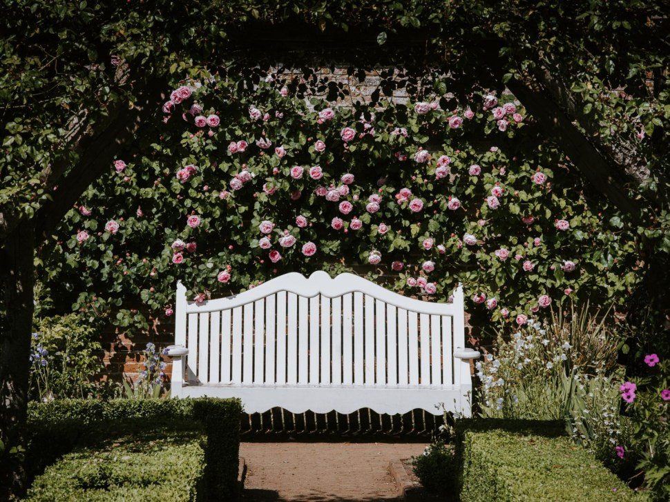 empty white wooden bench by wall of roses