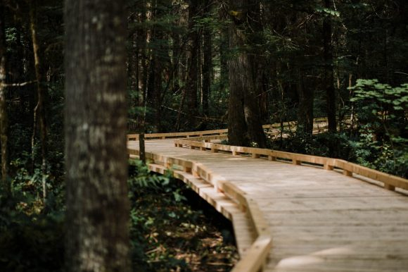 brown wooden dock in the middle of forest