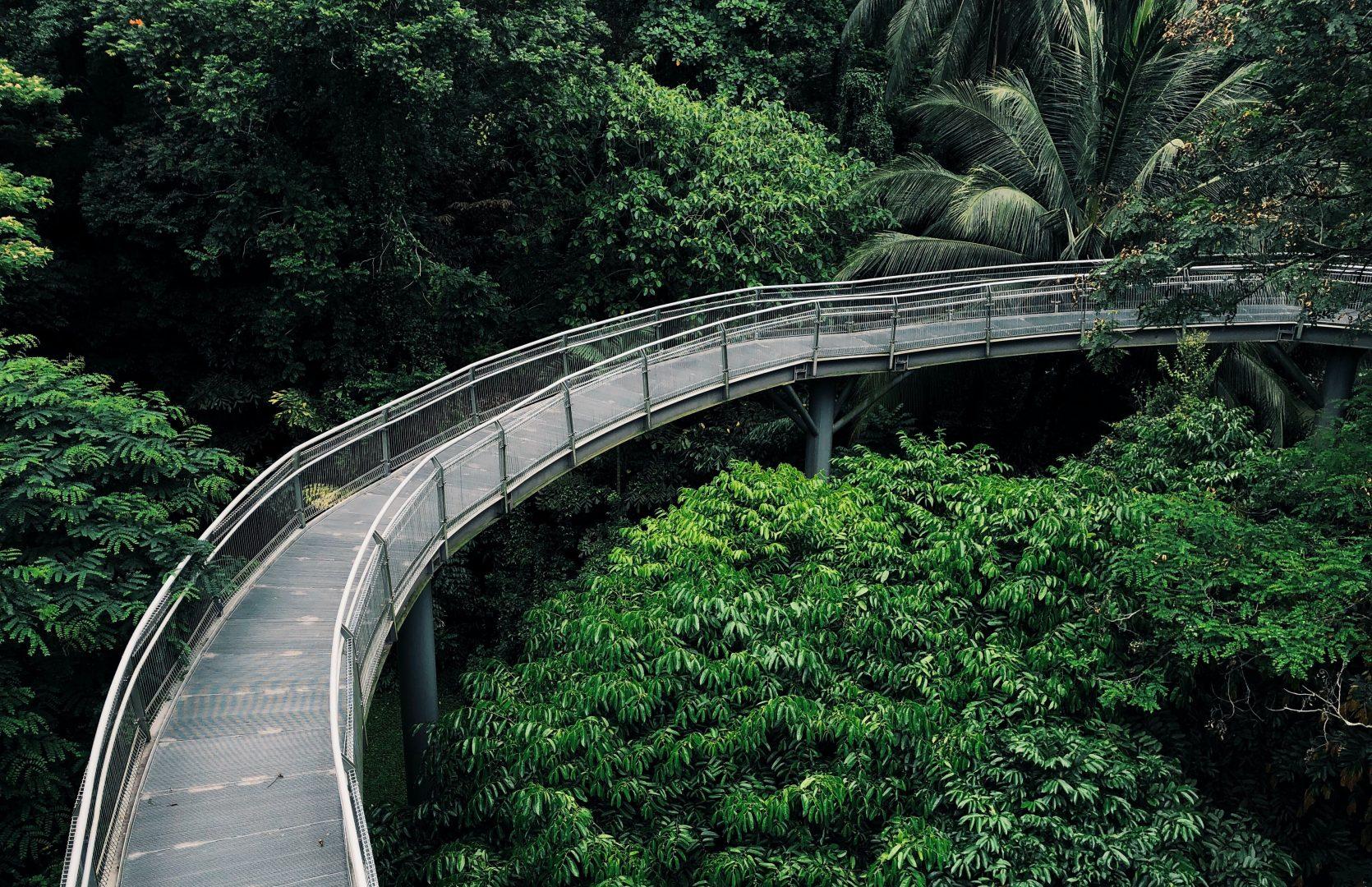 bridge above trees