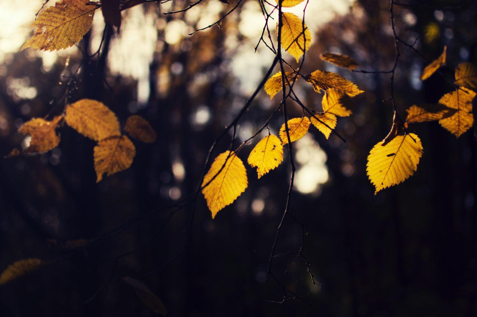 macro shot photo of brown leaves on tree
