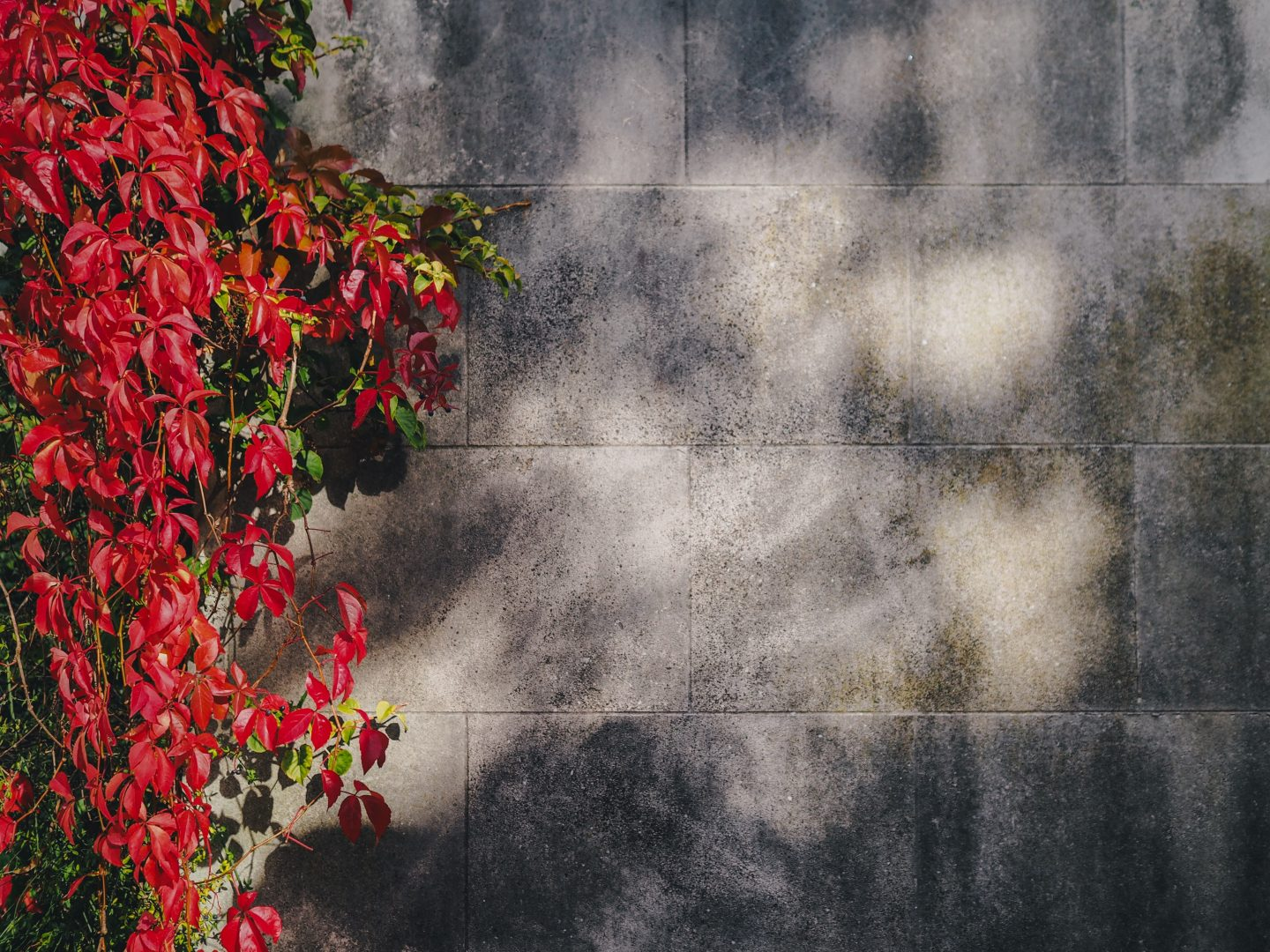 red petaled flowers near gray concrete wall