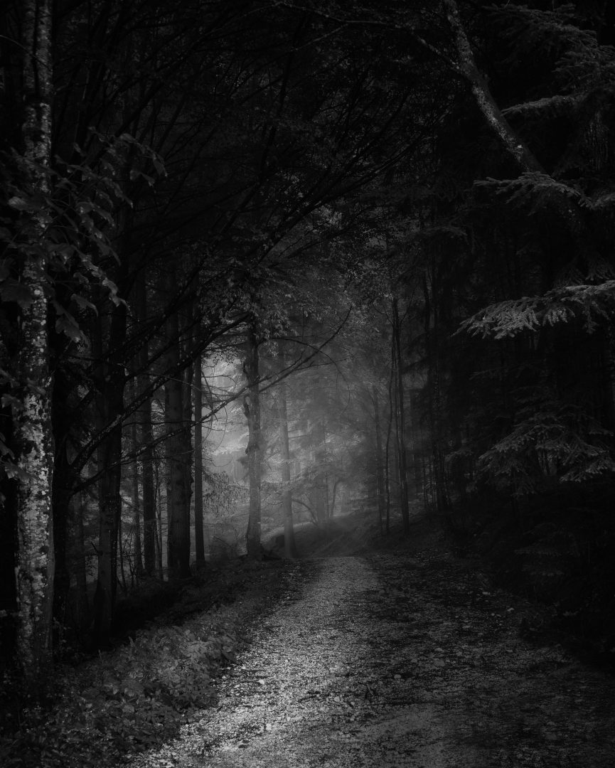 grayscale photo of trees and pathway