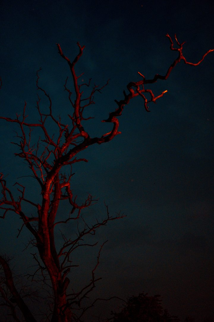 red bare tree during nighttime
