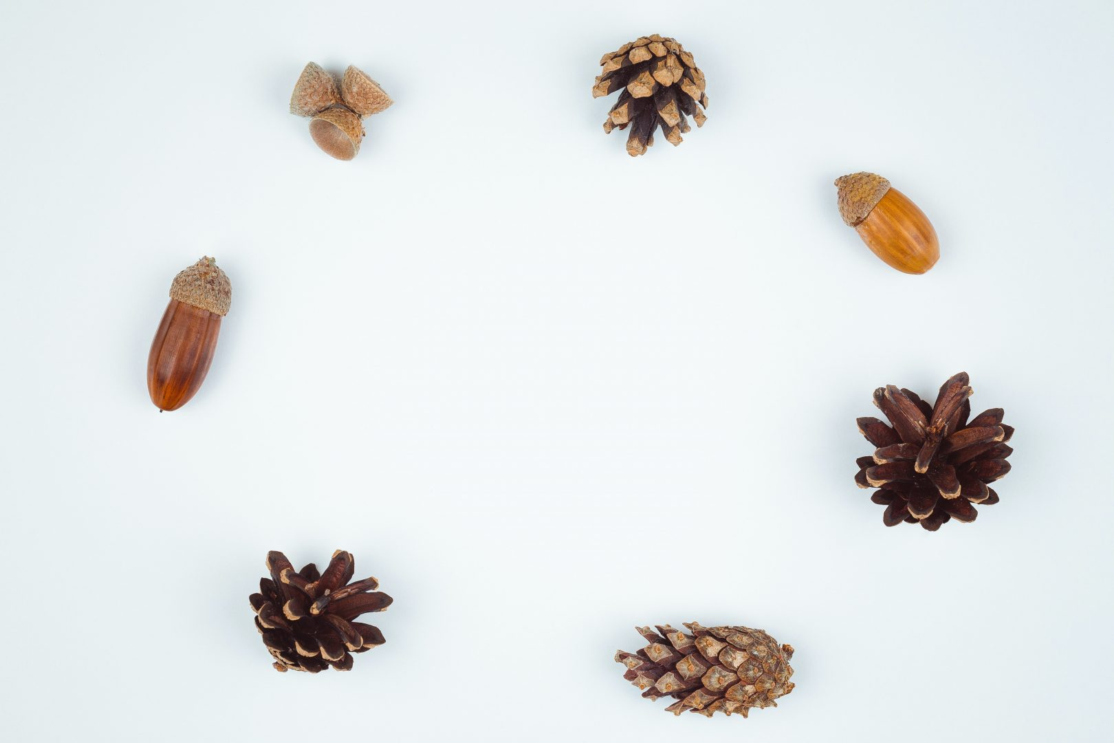 four brown pinecones and three acorns
