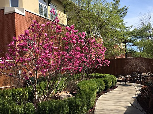 Springtime at Claridge Court