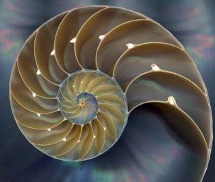 La geometría fractal, las escrituras y el evangelio