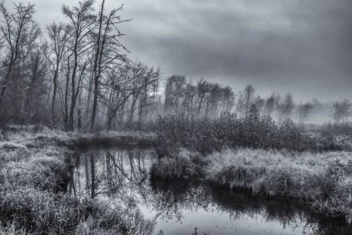 Fog & Frost