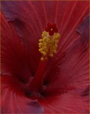 Into the Fleur