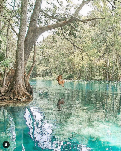 girl swinging off of a rope swing attached to a cyprus tree into silver river springs in florida