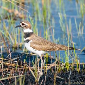 birds - 850_0285.jpg