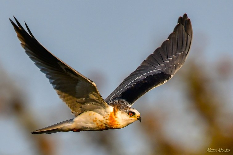 birds - 850_1587.jpg
