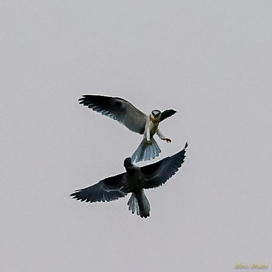 birds - 850_1741.jpg
