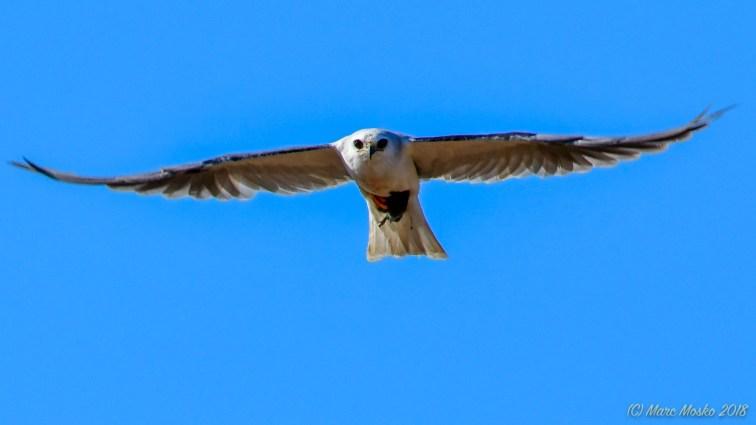birds - 850_1848.jpg