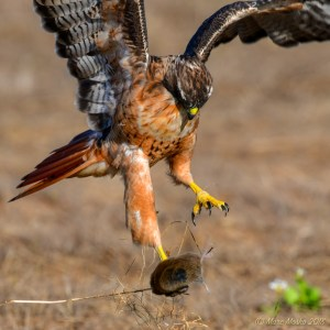 birds - 850_2543.jpg