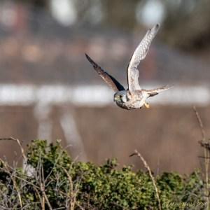 birds - 850_4679.jpg
