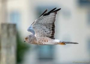 birds - 850_4919.jpg
