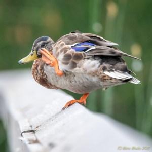 birds - 850_6486.jpg