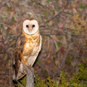 birds - 850_6516-2.jpg