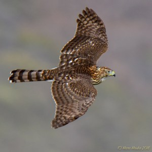 birds - 850_6688.jpg