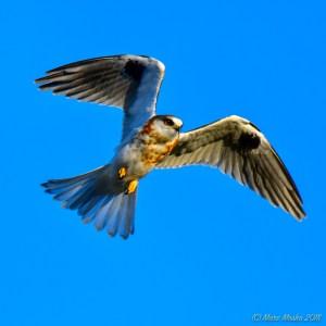 birds - 850_7904.jpg