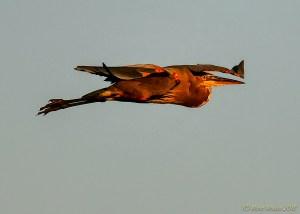 birds - 850_8130.jpg