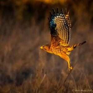 birds - 850_9288.jpg